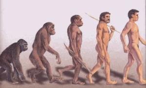 evoluzione-300x181 La storia dei nostri antenati
