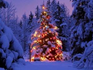 albero_di_natale-300x225 La simbologia natalizia tra antichi rituali e tradizioni