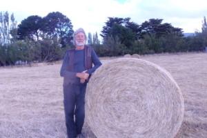 Alle origini dei cerchi nel grano